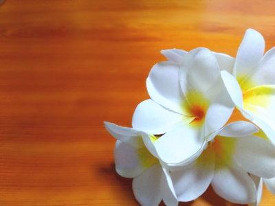 フラダンスにプルメリアの花