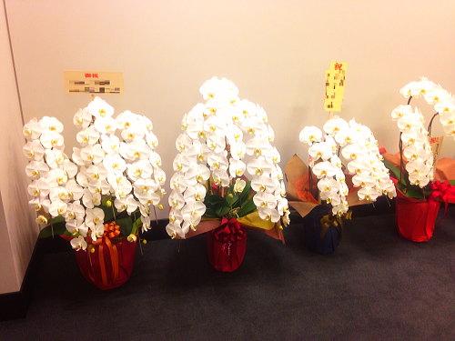 お祝い胡蝶蘭のお返し