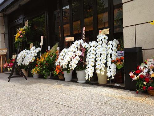 お店の前に飾られたお祝い胡蝶蘭